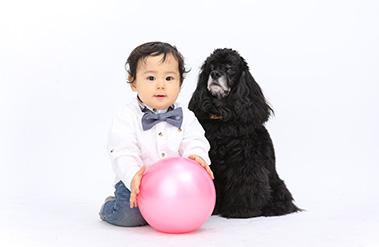 赤ちゃんとスパニエル犬